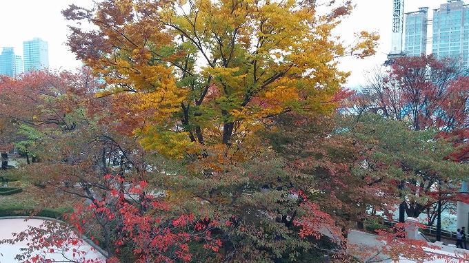 秋の紅葉 - ロッテワールド・マジックアイランド(Lotte World.)
