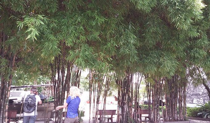 戦争証跡博物館(War Remnants Museum.)カフェの向かいの竹藪。